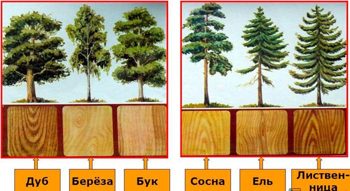 виды древесины для стропил